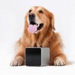 Friday's Gadget: Petcube